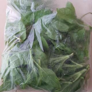 菊芋の若菜