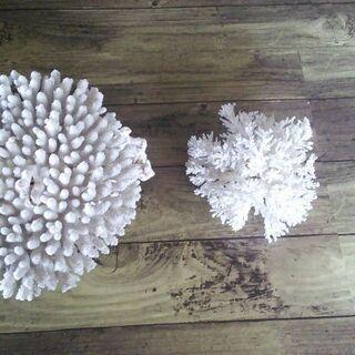 珊瑚セット