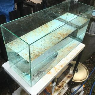 全面ガラス水槽