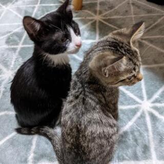 3ヶ月の子猫2匹 男の子