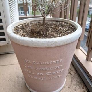 【急募】おしゃれ植木鉢!ガーデニング始める方に最適!