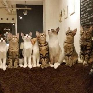 今日、保護ネコカフェ行きませんか?