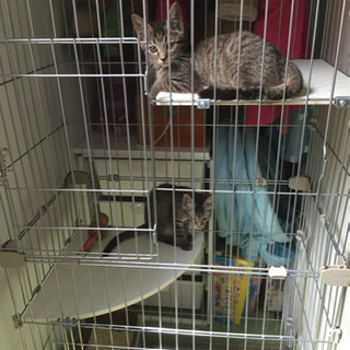 【ネット決済】猫用ケージ CCGE-752+おまけ付き