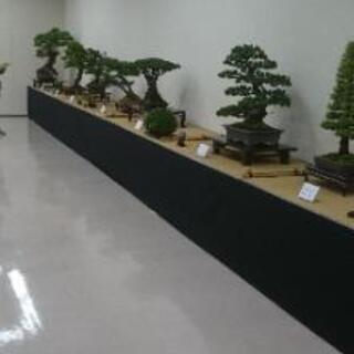 三重四日市盆栽会、盆栽教室
