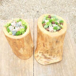 多肉植物+流木加工鉢 No11