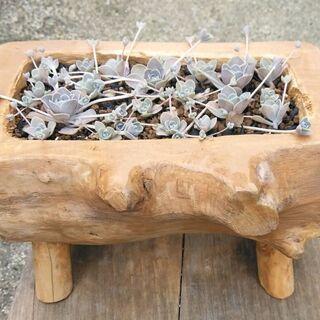 多肉植物+流木加工鉢 No12