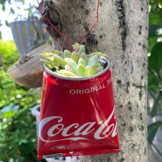 リメ缶 多肉植物 寄せ植え