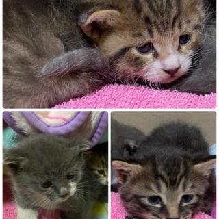 至急里親募集!!小さな野良の子猫3匹保護しました。