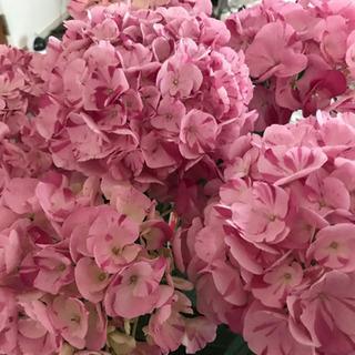 【ネット決済】期間・数量限定⭐︎ 紫陽花の切花いろいろ