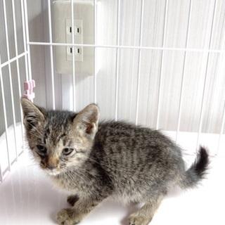 生後1ヶ月ほどの子猫