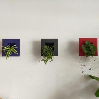 壁掛けグリーン 観葉植物 3つセット