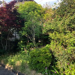 庭石 庭木 差し上げます。紅葉 DIY ガーデン 無料 0円