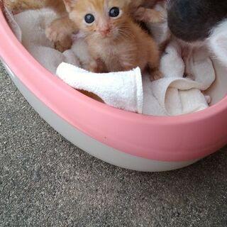 生後1ヶ月半の子猫の里親募集中