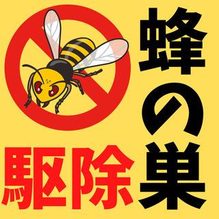 蜂の巣の駆除🐝《愛知県全域対応》