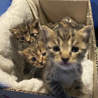 お話し中です。子猫1〜2ヶ月の子猫たち里親募集!