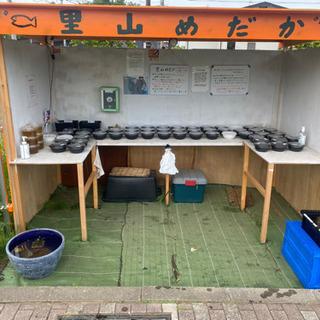 【ネット決済】里山公園前のメダカ無人販売所 里山めだか 5/12出品