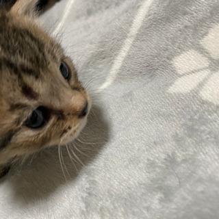 生後3週の子猫