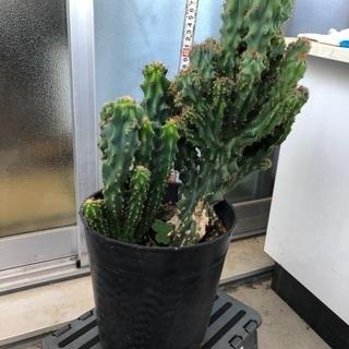 サボテン 観葉植物