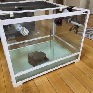爬虫類小動物飼育用 ガラスケース