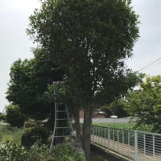 庭木、樹木の剪定、造園作業、茨城県、栃木県