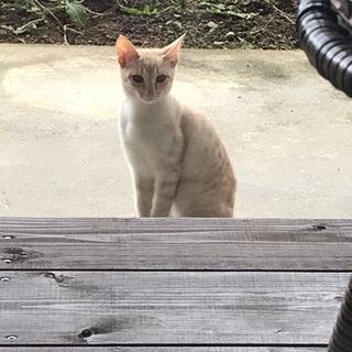 経験豊富な愛猫家さん❣️募集❣️