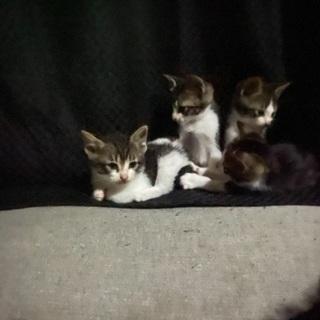 1ヶ月半の子猫ちゃん4匹