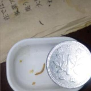 孵化後1週間以内のミルワーム1匹1円
