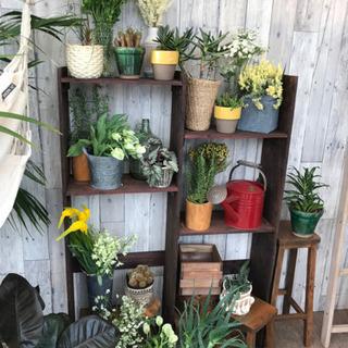 造花装飾 店舗装飾