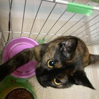 人懐っこい猫の親募集してます