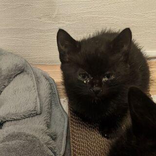 黒猫ちゃん4匹