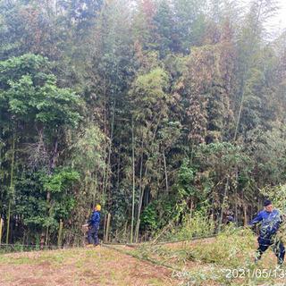 森林伐採抜根 竹林伐採抜根整地工事ならツチヤガーデンホームへ/所...