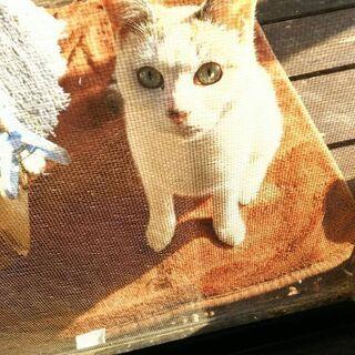 推定8ヶ月の美猫