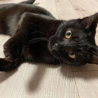 8か月メス黒猫💕左前足に少し障害あり【候補者様トライアル中】