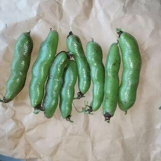 採れたてそら豆です。一本の値段です。早い物勝ち!