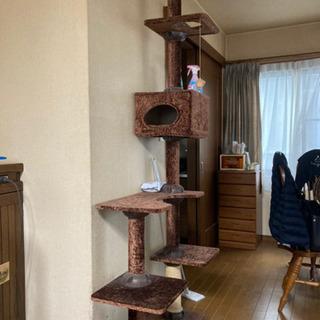 猫のタワー