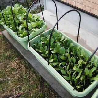 家庭菜園 プランターを譲ってください