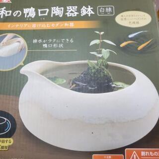 【ネット決済】メダカのビオトープ
