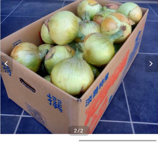 玉ねぎの名産地、淡路島直送 玉ねぎ10キロ 送料込み3500円