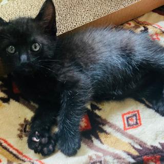 ※応募者ありの為、募集一時停止します※4月5日生まれの兄妹猫ちゃん