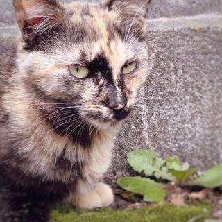 〘急募〙4~5ヶ月の猫ちゃん
