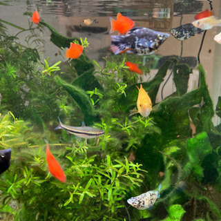 熱帯魚 色々