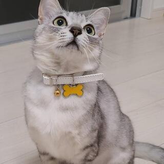 きいチャン♀️(保護猫)里親募集