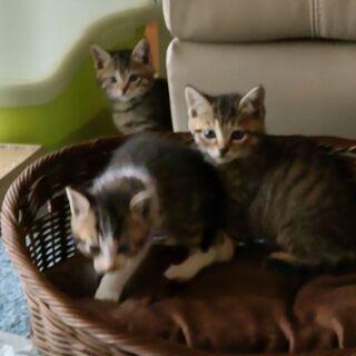 仔猫 1ヶ月〜2ヶ月位