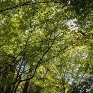 【予約制】自然の力体験会(広島)