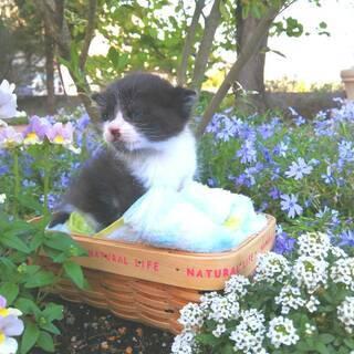 猫の譲渡会in豊明 ~ ちーむ にゃいんず 2021年5月22日...