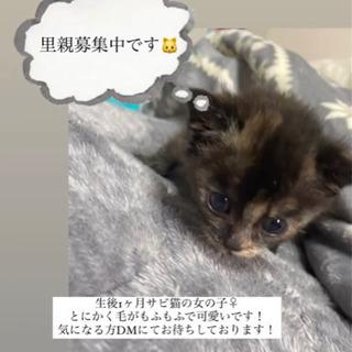 生後1ヶ月のサビ猫ちゃん