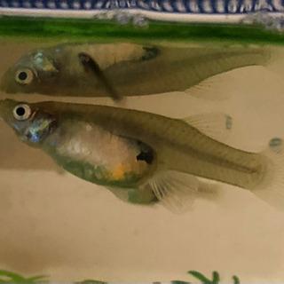 この魚は何?
