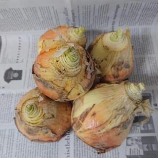 有機栽培 玉ねぎ 1㎏ 100円(保存用)