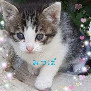 地域猫レスキュー♥みつば