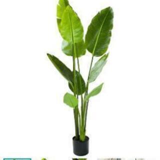 観葉植物 フェイク トラベラーズパーム